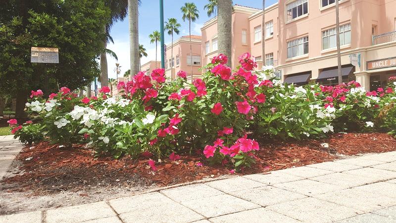 City of Boca Raton, Florida  (Palm Beach Relocation Guide)
